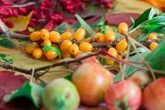 Colores brillantes del otoño Manzanas salvajes, espino cerval y bérbero en el fondo de las hojas de otoño Fotos de archivo libres de regalías
