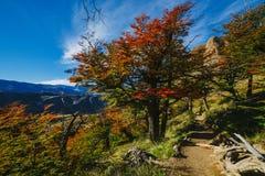 Colores brillantes del otoño y paisajes del parque Los Glaciares Caída en la Patagonia, el lado de Argentina fotografía de archivo