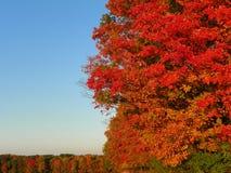 Colores brillantes e intensos del árbol del otoño en el Estado de Nueva York Fotos de archivo libres de regalías