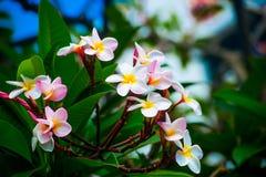 Colores brillantes, flor Foto de archivo