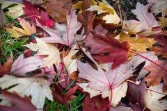 Colores brillantes y hermosos del otoño agradable y hermoso imágenes de archivo libres de regalías