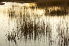 Colores calientes, ambarinos de un pantano después de la puesta del sol en Connecticut Imagen de archivo