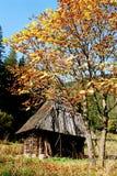 Colores calientes del bosque en las montañas imagen de archivo