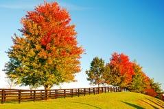 Colores cambiantes del ` s del otoño Foto de archivo libre de regalías