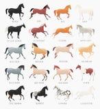 Colores comunes de la capa del caballo Foto de archivo libre de regalías
