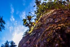 Colores de árboles con el cielo azul Imágenes de archivo libres de regalías