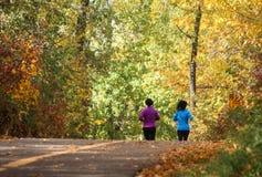 Colores de /autumn de la caída de árboles imagen de archivo