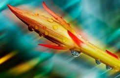 Colores de flores Imágenes de archivo libres de regalías