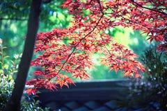 Colores de Japón Foto de archivo libre de regalías