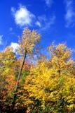 Colores de la caída Fotos de archivo