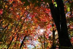 Colores de la caída fotografía de archivo libre de regalías
