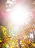 Colores de la caída bajo Sun fotografía de archivo libre de regalías
