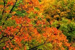 Colores de la caída, Bulgaria Imagen de archivo libre de regalías