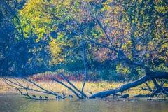 Colores de la caída de Iowa Imagenes de archivo