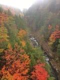 Colores de la caída de Vermont de la garganta de Queechee Foto de archivo
