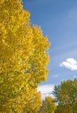 Colores de la caída del otoño Foto de archivo