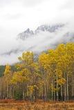 Colores de la caída del otoño Imagen de archivo