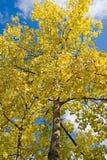 Colores de la caída del otoño Foto de archivo libre de regalías