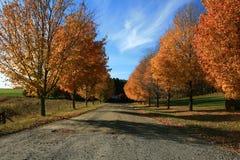 Colores de la caída en árboles Fotos de archivo libres de regalías