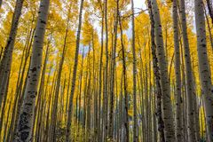 Colores de la caída en Aspen, Colorado foto de archivo libre de regalías