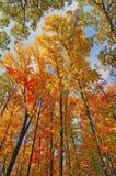 Colores de la caída en el toldo imagenes de archivo