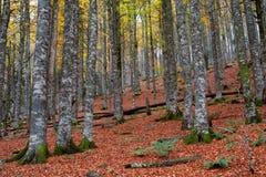 Colores de la caída en la estación del otoño Imagenes de archivo