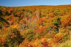 Colores de la caída en las montañas Imagen de archivo libre de regalías