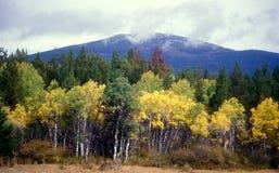 Colores de la caída en las montañas Foto de archivo libre de regalías