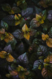 Colores de la caída en primavera Imagen de archivo