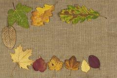 Colores de la caída, hojas coloridas de árboles en fondo marrón del paño Lugar para su texto Imagenes de archivo