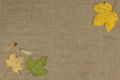 Colores de la caída, hojas coloridas de árboles en fondo marrón del paño Lugar para su texto Foto de archivo libre de regalías