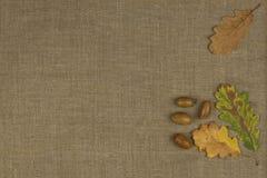 Colores de la caída, hojas coloridas de árboles en fondo marrón del paño Lugar para su texto Fotos de archivo