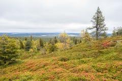 Colores de la caída - tiempo del ruska en Laponia Imagen de archivo libre de regalías