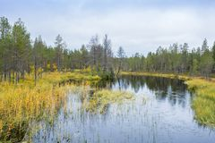 Colores de la caída - tiempo del ruska en Laponia Fotografía de archivo libre de regalías