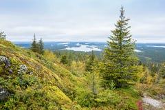 Colores de la caída - tiempo del ruska en Laponia Imagenes de archivo