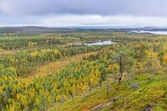 Colores de la caída - tiempo del ruska en Laponia Imágenes de archivo libres de regalías