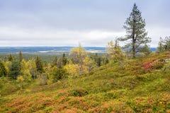 Colores de la caída - tiempo del ruska en Laponia Imagen de archivo