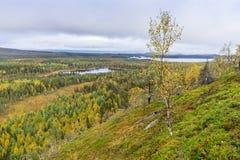 Colores de la caída - tiempo del ruska en Laponia Fotos de archivo libres de regalías