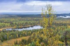 Colores de la caída - tiempo del ruska en Laponia Fotografía de archivo