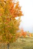Colores de la caída - vertical Fotos de archivo