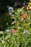 Colores de la cascada, Wildflowers en la montaña de Darland Foto de archivo libre de regalías