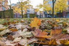 Colores de la corriente del otoño Imagenes de archivo
