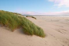 Colores de la costa de Oregon fotografía de archivo libre de regalías