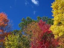 Colores de la estación de caída fotos de archivo libres de regalías