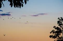 Colores de la mañana Imagen de archivo