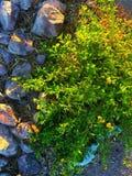 Colores de la naturaleza Fotos de archivo libres de regalías