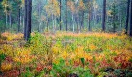 Colores de la naturaleza de la caída Foto de archivo libre de regalías