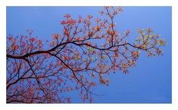 Colores de la naturaleza imagen de archivo libre de regalías