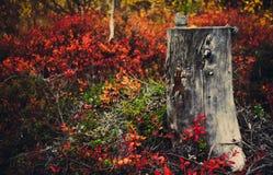 Colores de la naturaleza septentrional Fotografía de archivo libre de regalías