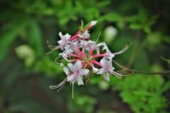 Colores de la primavera Foto de archivo